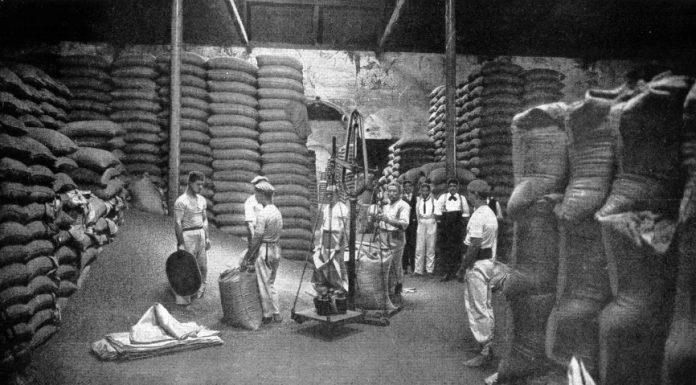 Economia cafeeira, exportação, produção