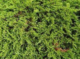 Botânica, planta, ecologia