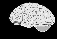 fisiologia-sistema-corpo
