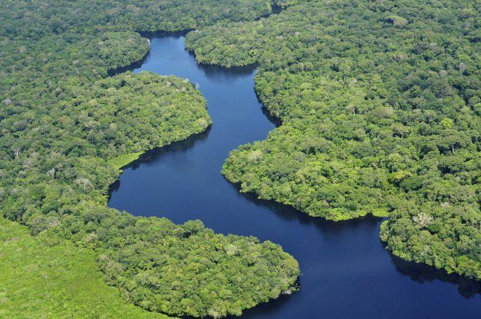 Biodiversidade, natureza, extinção