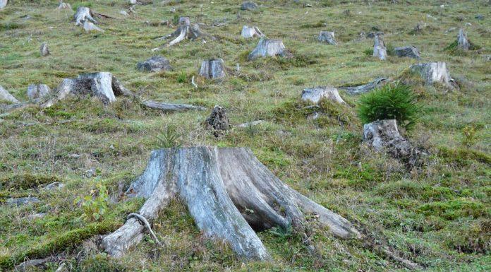 Desmatamento, corte, floresta
