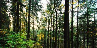 mundial das florestas, natureza, exploração